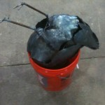 head in a bucket
